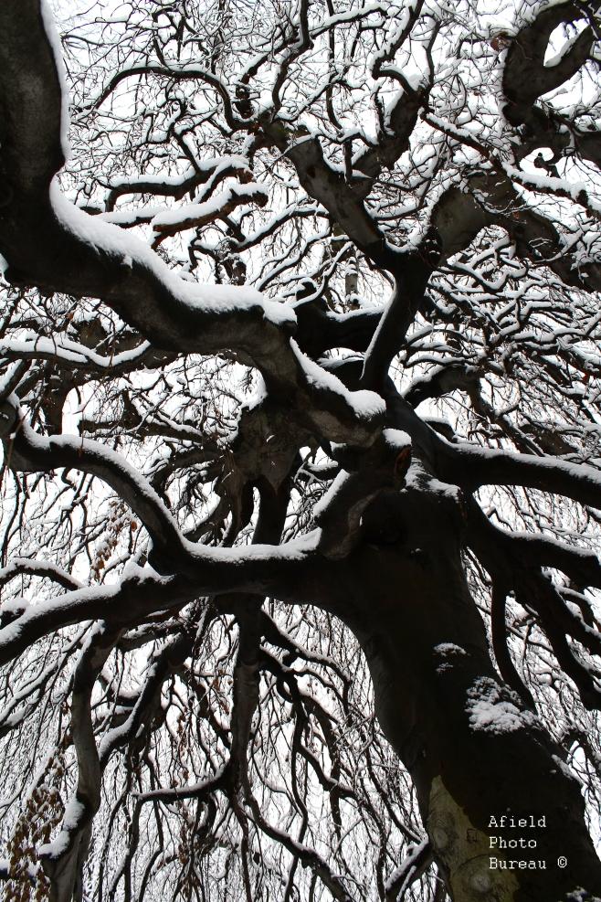 Common_Tree