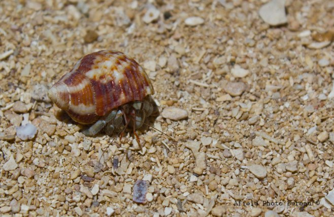 The beach was also the place to be if you were a Hermit Crab. There must have been fifty per square and in every size from