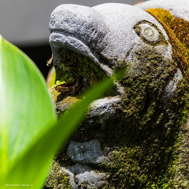 Here's a frog in a stone turtles mouth. Have I mentioned how much I loved those frogs. No frogs here in Dalian - not many birds either - plenty of mosquitoes though.