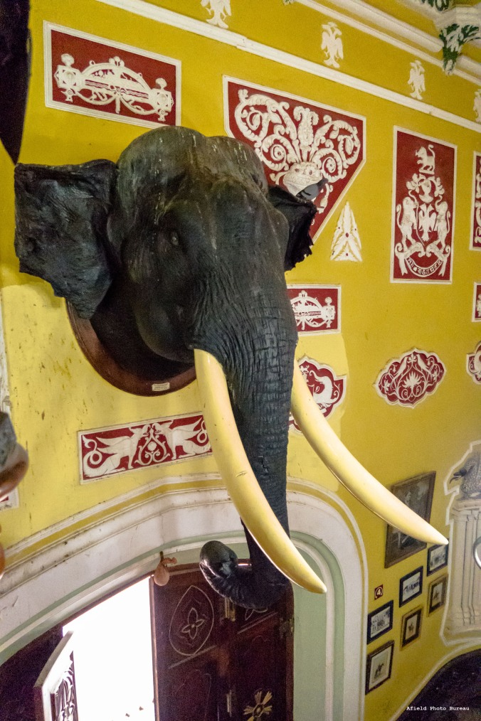 This is the first stuffed elephant's head I have ever seen. I do not know if it belongs to the footstools. Also, the doors are often left open, which means that pigeons come in and perch (shit) upon his head.