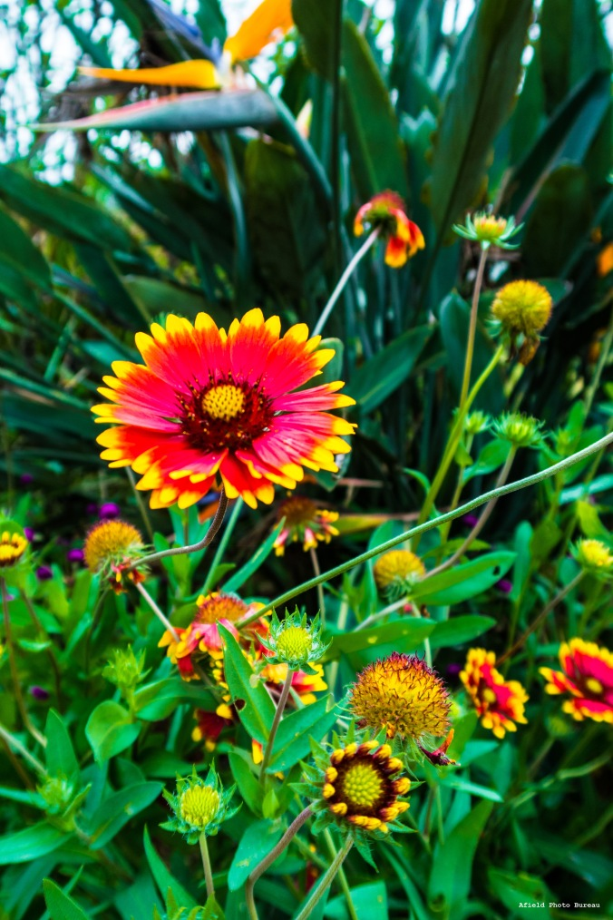 And lastly, some very vibrant flower that I do not know the name of but I can still appreciate it.